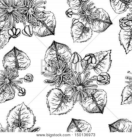 Seamless pattern with linden flowers and leaves. Honey pattern in vintage style. Black and white endless retro background. Drawing line sketch. Can be used in package design. Vector illustration.