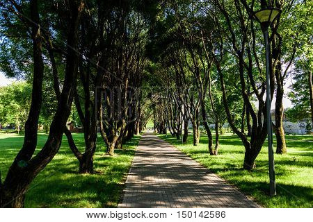 City footpath among trees in the summer