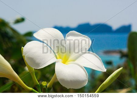 Flora and Sea Green View