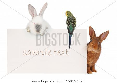 Rabbit and budgie with with a white background for text drawing