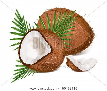 Coconuts with leaves. Vector illustration. Fully editable handmade mesh.