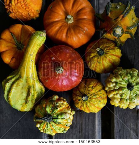 high-angle shot of some different pumpkins on a rustic wooden slates surface