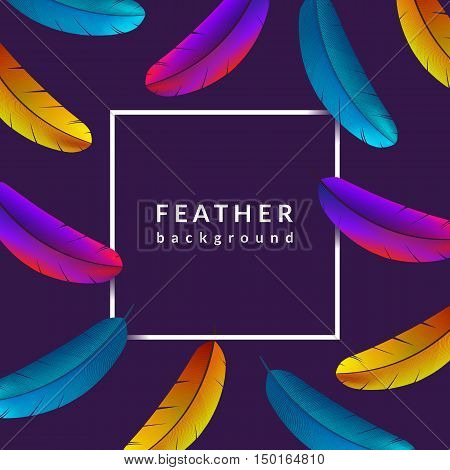 Colorful feather background. Beautiful bird feathers composition. Eps10 vector illustration.