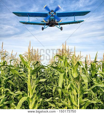 old biplane in the sky over a maize field