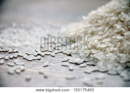 Rice and rice grains.Rice plant on white rice as background.