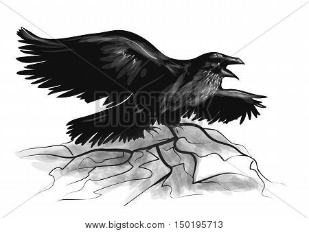raven on white. raven with wide-spread wings black