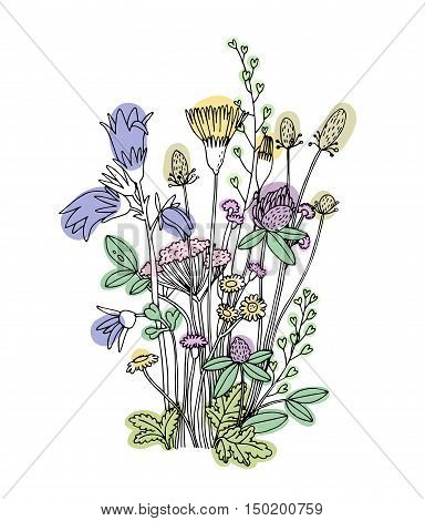 Sketch of the wildflowers on a white background. Hand drawn illustration.
