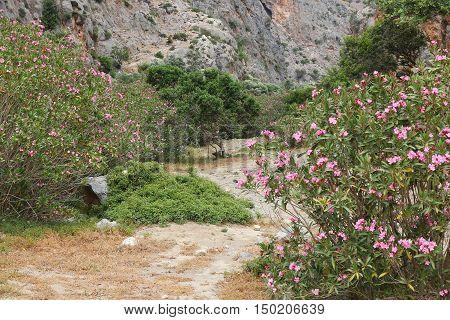Oleander Route