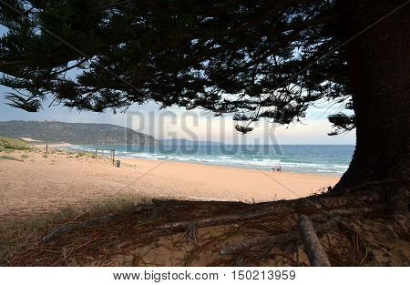 Palm Beach one of Sydney's iconic northern beaches