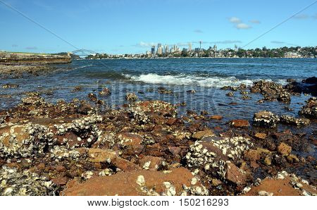 View of Sydney skyline in daytime from Woolwich NSW Australia. Rocks and dead shells in the foreground Sydney skycrapers in the background.