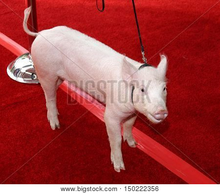 A pig at the Los Angeles premiere of 'Charlotte's Web' held at the ArcLight Cinemas in Hollywood, USA on December 10, 2006.