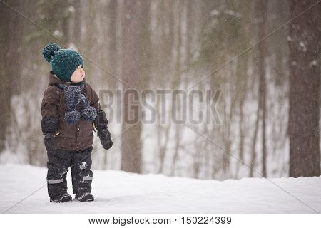 Portrait of adorable little toddler boy walking in the winter forest and having fun with snow. Child enjoying winter. Child watching falling snow outdoors. Winter Christmas and lifestyle concept.