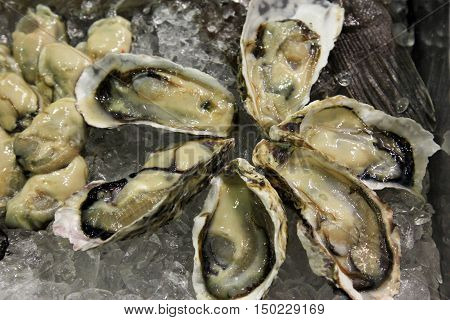 fresh French appetizer oysters on ice for gourmets
