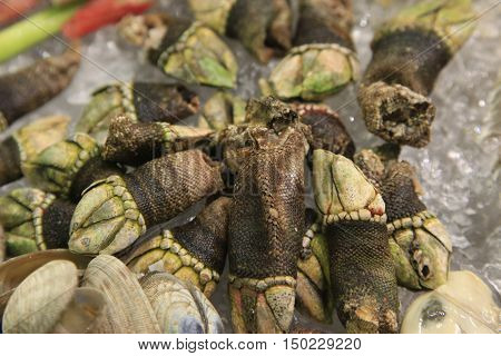 Percebes are gooseneck barnacles a traditional Spanish delicacy