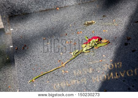 Dried Rose On A Grave