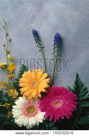 Flowers including Gerber Daisies laid against a painted canvas backdrop
