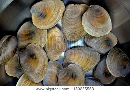 Littleneck clams soaking in salt water inside a stainless steel bowl.