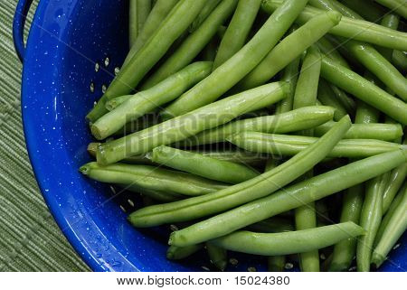 Freshly washed green beans in a blue enamel colander.  Close-up with shallow dof.
