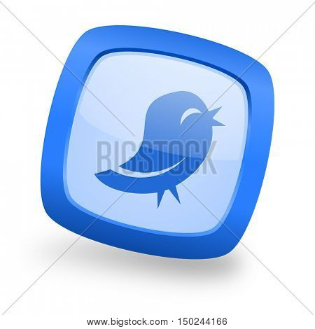 twitter blue glossy web design icon