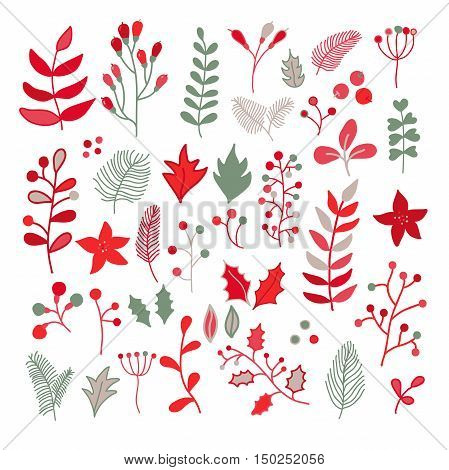 Christmas floral vector drawing set with holly poinsettia mistletoe branch leaves and berry. Simple doodle plants in red green gray and white colors. Great for holiday decor