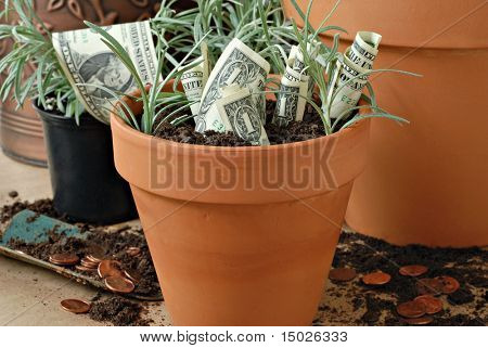 Conceptual financial image of growing money.  Planting pennies to harvest dollars.  Close-up with shallow dof.