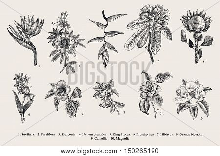 Exotic flowers set. Botanical vector vintage illustration. Design elements. Black and white