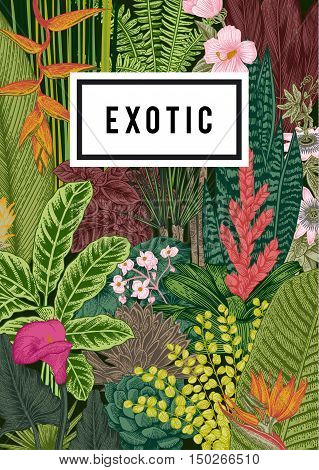 Vector card vintage. Exotic flowers and plants. Botanical classic illustration.