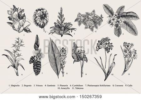 Exotic flowers set. Botanical vector vintage illustration. Design elements. Black and white