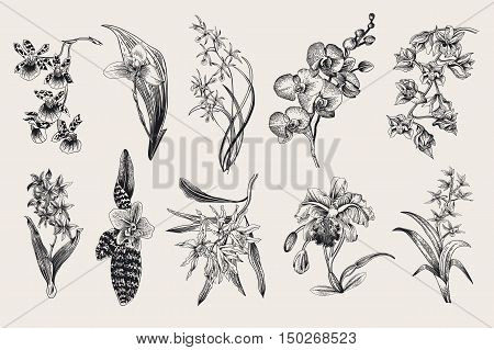 Exotic orchid set. Botanical vector vintage illustration. Design elements. Black and white