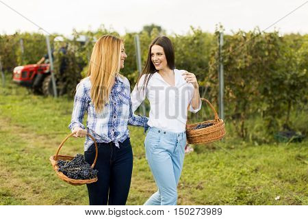 Two girls with basket full of grapes walking in vineyard