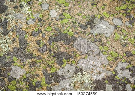 rock surface covered with fungi, lichen. A lichen is a composite organism that arises from algae or cyanobacteria (or both) living among filaments of a fungus in a mutually beneficial relationship
