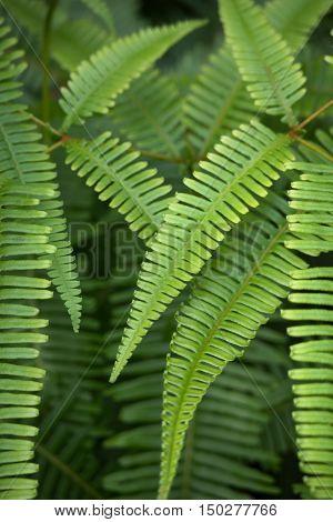 Fern Fronds In A Rain Forest