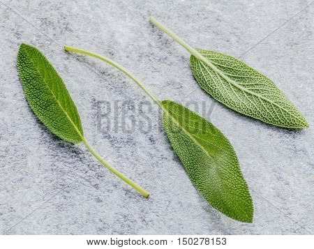 Closeup Fresh Sage Leaves  On Stone Background. Alternative Medicine Fresh Salvia Officinalis. Fresh