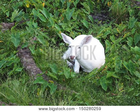 rate white deer laying down in a wooded area