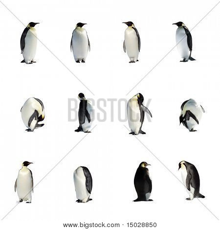 Collection of isolated penguins