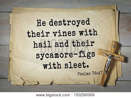 TOP-1000.  Bible verses from Psalms.He destroyed their vines with hail and their sycamore-figs with sleet.