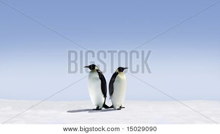 Penguins don't know where to go
