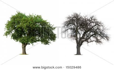Isolated Tree in Winter and Summer