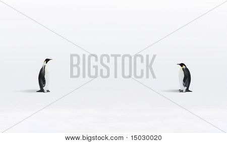 Two Emperor Penguins are meeting in Antarctica