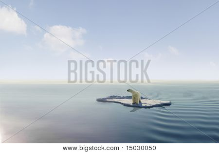 Polar bear on an ice floe