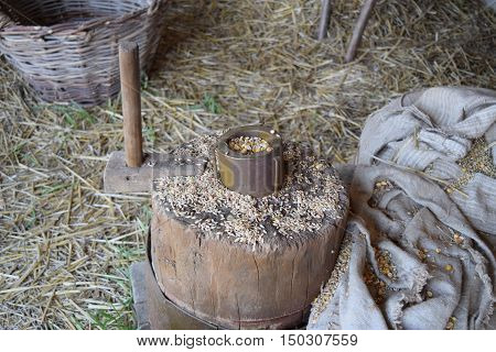 Grains Of Wheat And Corn On A Stump