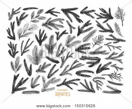 Collection of pine tree and spruce branches. Ink illustration. Black silhouettes isolated on white background. Vector spruce branches. Collection of plants.