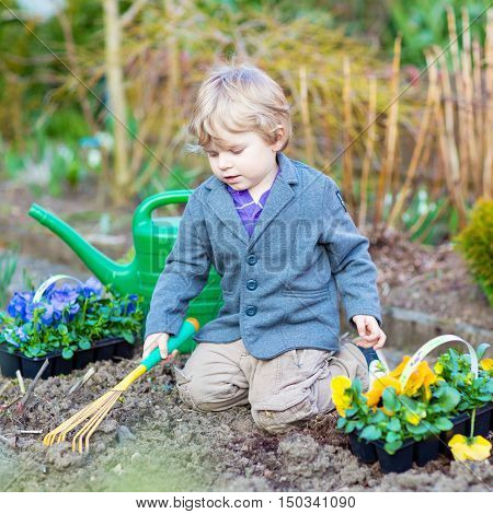 Little kid boy helping with gardening in spring garden. Funny child planting flowers. Family, spring, planting concept.