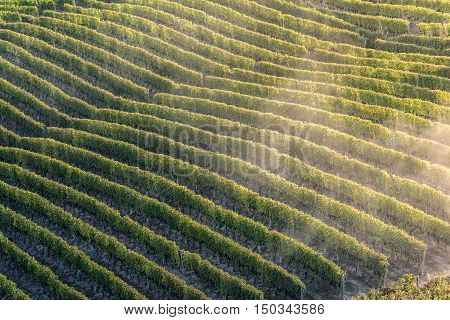 Sunset on italian hill region called langhe with ripe grapewine