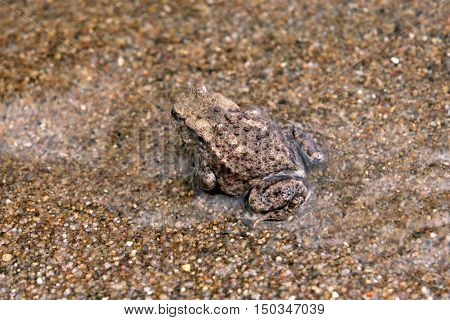 Toad At A Lake