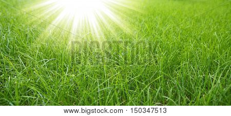 a very a nice green grass background