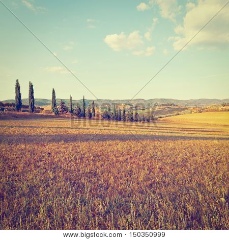 Sloping Hills of Tuscany in the Autumn Instagram Effect