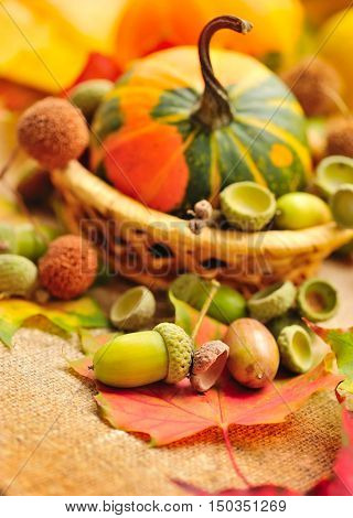Harvested Acorns With Autumn Leaves On Sacking