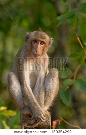 Portrait of young monkey be inattentive and sitting at the concrete fence