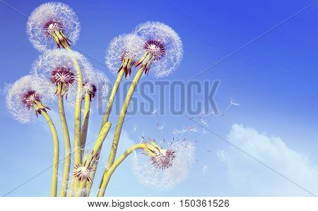 Overblown dandelion with seeds flying away with the wind. 3D illustration
